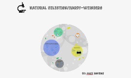 Natural Selection/Hardy-Weinberg