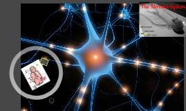 The Nervous System, Neurons, and Endocrine Sytem