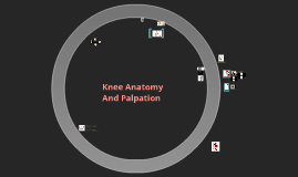 Copy of Knee Anatomy and Palpation