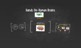 Hands On: Human Brains