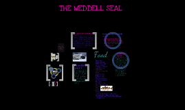 the weddal seal