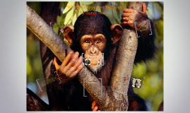 Why Monkeys Live In Trees