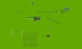 Copy of Amazon Rainforest Project
