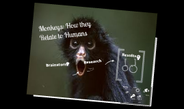 How Apes are Related to Humans
