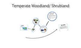 Temperate Woodland/ Shrubland