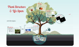 Plant Structure & Life Span