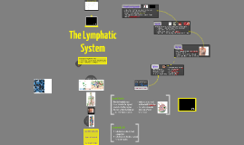 Anatomy & Physiology: The Lymphatic System