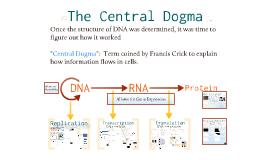 Copy of Copy of AP Bio- Molecular Genetics 2:  The Central Dogma