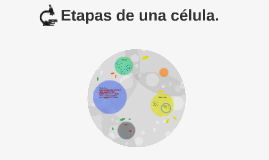 Copy of Etapas de una celula.