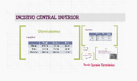 INCISIVO CENTRAL INFERIOR