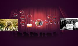 Evolution of  Colombian Cinema