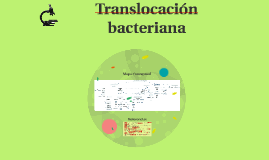Translocación bacteriana