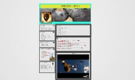 Copy of 犀牛