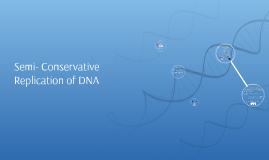 Semi- Conservative Reproduction of DNA
