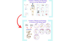 MWR - Structure and Function of the Skeletal System