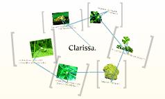 Clarissa.