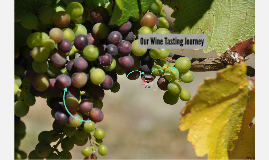 Our Wine Tasting Journey