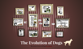 The Evolution of Dogs