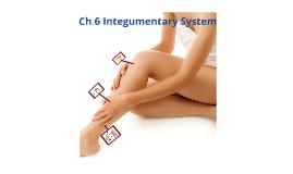 MED 100 - Ch. 6 Integumentary System