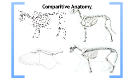Copy of Unique Anatomical Adaptations