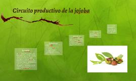 Circuito productivo de la jojoba