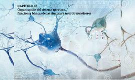 Copy of Copy of CAPITULO 45 Organización