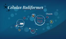 Células Buliformes