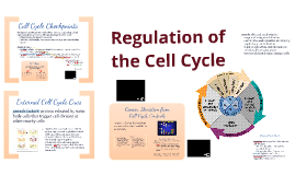 BI 3: Control of Cell Cycle