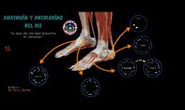 Copy of Anatomía y patologías del pie