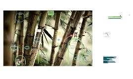 Copy of #3. Taller de Bambú. Técnicas de Construcción y Preservación del Bambú.