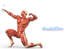 Copy of Muscle system