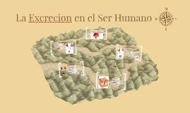 La Excrecion en el Ser Humano