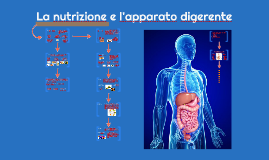 La nutrizione e l'apparato digerente