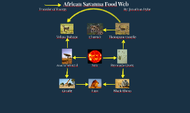 African Savanna Food Web