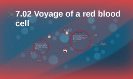 7.02 Voyage of a red blood cell