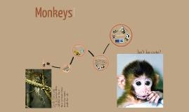 Animal Presentation