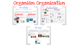 Copy of AP Bio- Physiology 1: Organism Organization