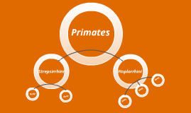 Primeates