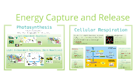 Energy Capture and Release: Honors Biology