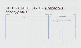 SISTEMA MUSCULAR EN Piaractus brachypomus