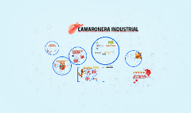 Copy of CAMARONERA INDUSTRIAL