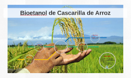 Copy of Bioetanol de Cascarilla de Arroz