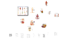 Copy of Los aparatos y sistemas de nuestro cuerop