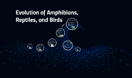 Evolution of Amphibians, Reptiles, and Birds