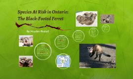 Species at Risk: Black-Footed Ferret
