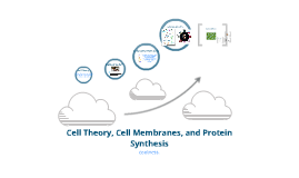 Cell Theory, Cell Membrane, and Protein Synthesis