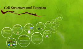 Basic Cell Structure and Function
