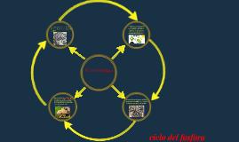 EL ciclo del fosforo