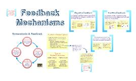 BI 4: Feedback Mechanisms
