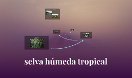 selva humeda tropical